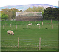 C6530 : Minearny Base Station, Lough Foyle Base Line by Rossographer