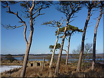 NT6378 : East Lothian Landscape : Blocks and Pines at Hedderwick, East Lothian by Richard West