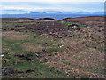 NG2466 : Moorland towards Waternish Point by Richard Dorrell