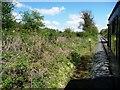 SJ2823 : Hedgerow alongside the railway line. by Christine Johnstone