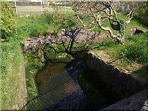 SX9063 : Stream, King's Gardens, Torquay by Derek Harper