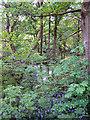SD7312 : Wooded Area near Bradshaw Brook by David Dixon