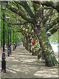 TL0549 : Footpath at The Embankment by Thomas Nugent