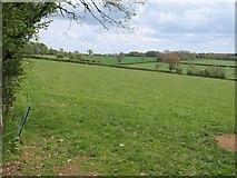 ST2214 : Field near Otterford by Derek Harper