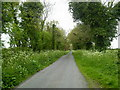 N9347 : Country Road, Co Meath by C O'Flanagan