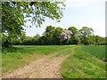 TF8824 : Flowering tree on woodland edge, South Raynham by Evelyn Simak