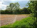 SK7476 : Field corner near Upton by Andrew Hill
