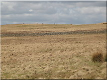 NY5775 : Panorama from the cairn north of Borderrigg (2: NNW - Grey Hill) by Mike Quinn