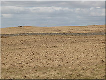 NY5775 : Panorama from the cairn north of Borderrigg (3: NW - Grey Hill) by Mike Quinn