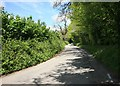 SX1360 : Cornish Lane in May by roger geach