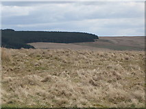 NY5775 : Panorama from the cairn north of Borderrigg (14: ESE - High Grains) by Mike Quinn