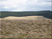 NY5775 : Panorama from the cairn north of Borderrigg (15: ESEb - Mid Knowe) by Mike Quinn