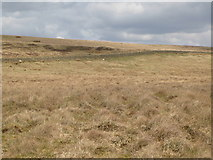 NY5775 : Panorama from the cairn north of Borderrigg (19: NEb) by Mike Quinn