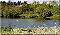 J4774 : Kiltonga nature reserve, Newtownards (13) by Albert Bridge