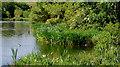J4774 : Kiltonga nature reserve, Newtownards (14) by Albert Bridge