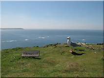 SM7108 : Viewpoint on Skomer Head by Gareth James