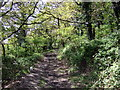 SN1642 : Uphill path through woodland by ceridwen