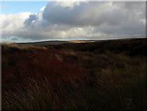 NY6738 : Moorland near Ousby Fell by Colin Bruce