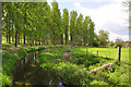SK9230 : The poplar lined River Witham - Great Ponton by Mick Lobb