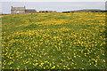 SW3935 : Buttercup meadow at Morvah by Elizabeth Scott