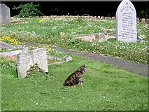 ST0642 : Churchyard, St Decumans Church by Maigheach-gheal