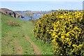 SW7925 : The Coast Path above Men-aver Beach by Tony Atkin