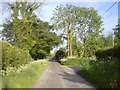 N9656 : Country Road, Co Meath by C O'Flanagan