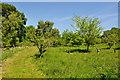 TM4593 : Abandoned Orchard by Ashley Dace
