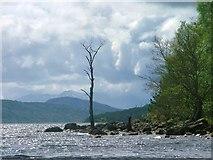 NN6259 : Loch Rannoch Shoreline by Mick Garratt