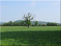 SJ2618 : View near Four Crosses by Alex McGregor