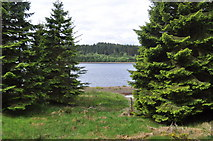NY6491 : Looking through the trees to Kielder Water by Nicholas Mutton