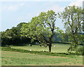 ST6056 : 2010 : Cattle and fields near Cameley by Maurice Pullin