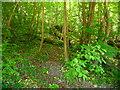 SU3443 : Anna Valley - Woodland by Chris Talbot