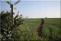SK7369 : Footpath to Egmanton by Richard Croft