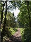 ST1637 : Track, Ramscombe by Derek Harper