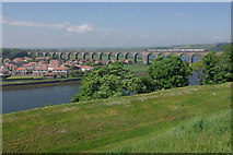 NT9953 : River Tweed, Berwick upon Tweed by Stephen McKay