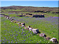NG1854 : Galtrigill bluebells by Richard Dorrell