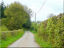 SO2941 : Lane between Dorstone and Mynyddbrydd by Jonathan Billinger
