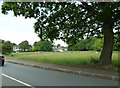 TQ4469 : Green in Manor Park Road by Basher Eyre