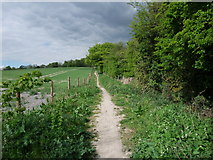 SU6022 : New South Downs Way footpath to Beacon Hill by Tim Heaton