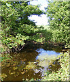 TM3370 : Pond at Moat Farm by Geographer