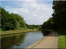 SK5537 : Beeston Canal near Imperial Tobacco by Andrew Abbott