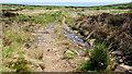 C7232 : Altikeeragh Nature Reserve near Castlerock (5) by Albert Bridge