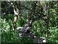 SM9530 : Woodland near Buckette by ceridwen