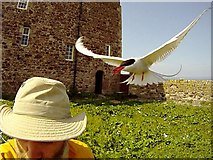 NU2135 : The photographer having a funny tern on Inner Farne by Andy Waddington
