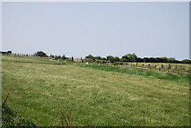 NZ9208 : Field between the A171 and the old railway by N Chadwick