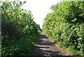 NZ9009 : The old railway line by N Chadwick