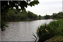 SK3281 : Mill Pond, Abbeydale, Sheffield by Graham Hogg