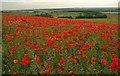 SE4010 : Poppy field overlooking the Dearne Valley by Steve  Fareham