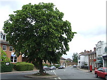 TQ1667 : Tree in Thames Ditton High Street by Malc McDonald